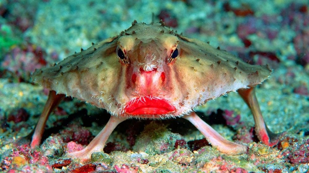 the ugliest fish