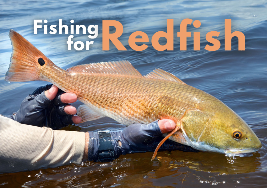 Fishing for Redfish