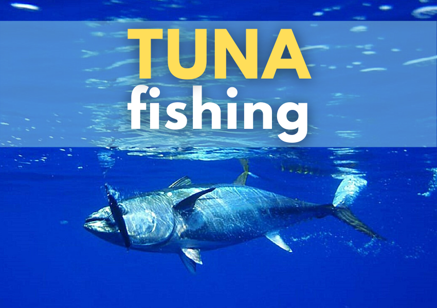 tuna fishing WeFish