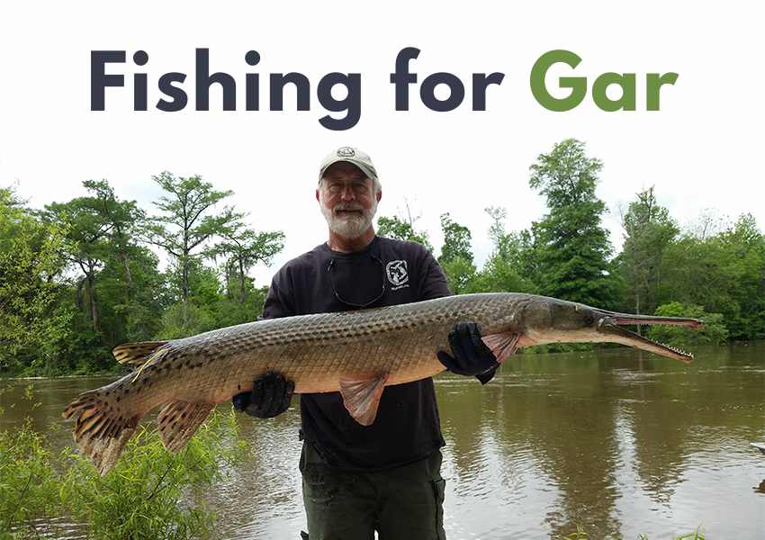 fishing for gar