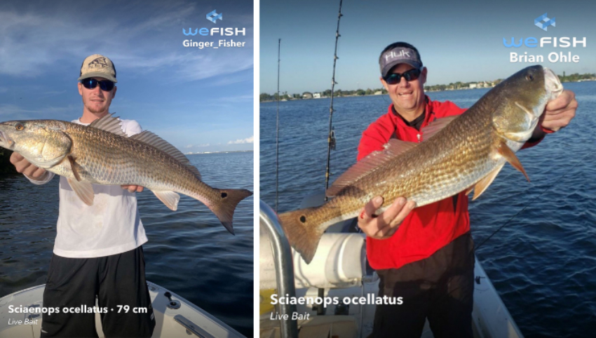 Fishing for Redfish  How to Catch a Redfish WeFish